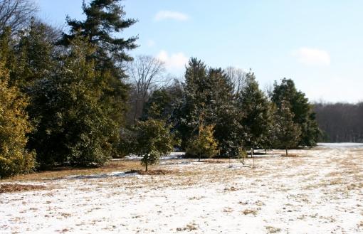 Holly Hill Dawes Arboretum (1)