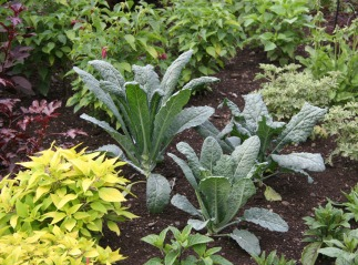 Edibles in landscaped beds