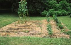 Before: Garden in 1993