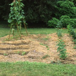 Before: Garden in 1993