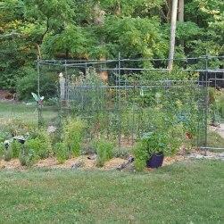 After: Garden in 2012