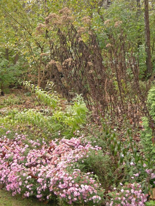 Oct. mums amsonia eupatorium changed resized