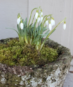 moss container