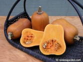 squash-winter-honey%20nut-72dpi-03