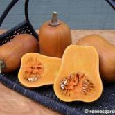 squash-winter-honey%20nut-72dpi-03