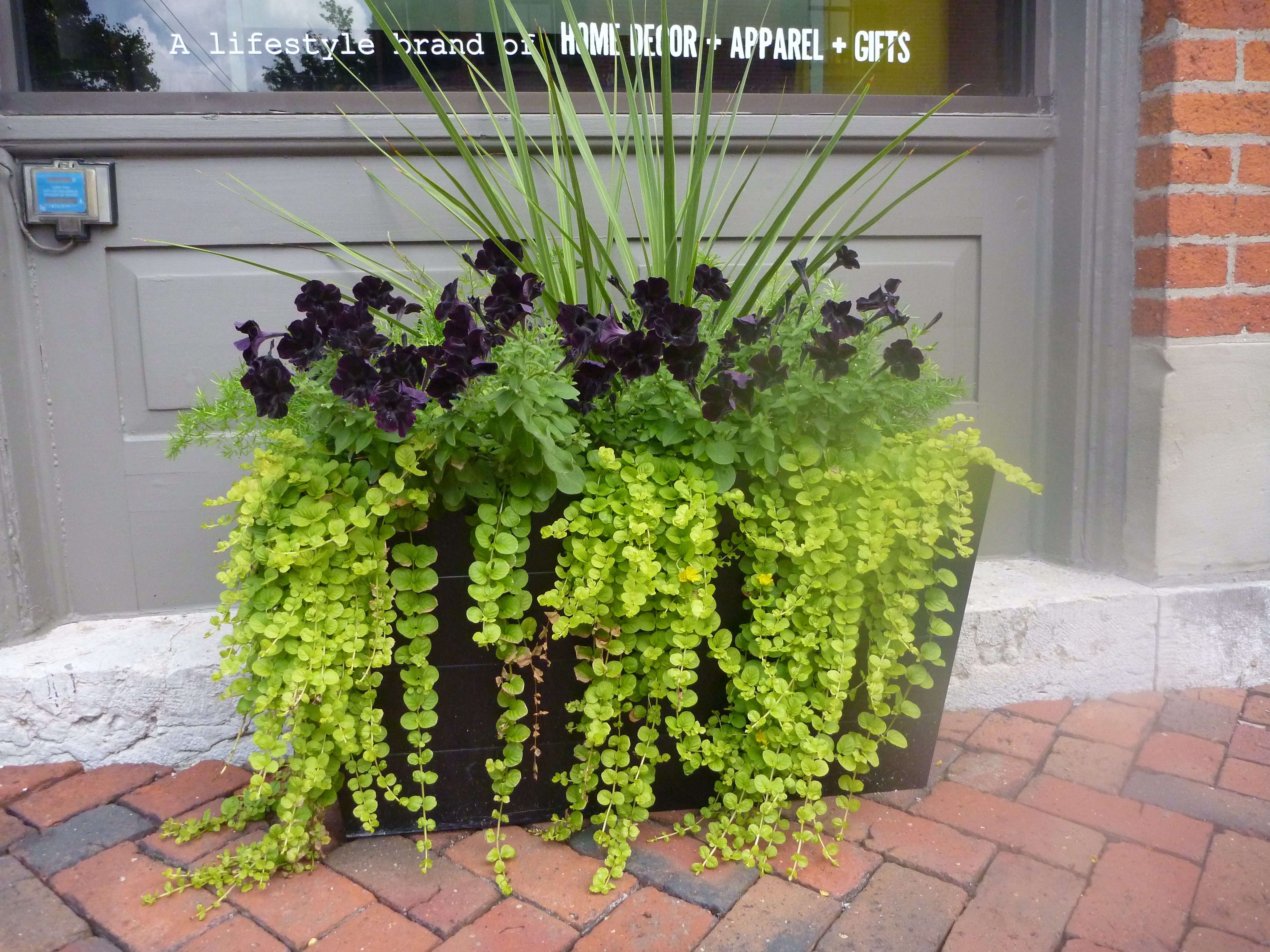 Top 10 plants for a thriving patio container garden