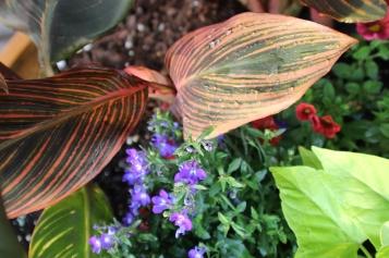 Cannal leaf in the rain