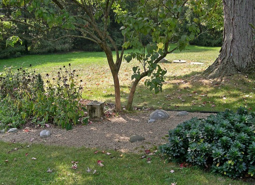 A dry streambed in Debra's garden with Allegheny spurge on the right.  Notice the large silver maple trunk in the upper right.  Tree roots are much more efficient at taking up water and nutrients than shrubs and perennials.