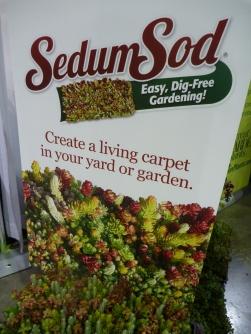 Sedum sod