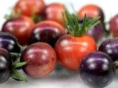 Tomato blueberries at rareseeds.com
