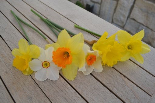 Daffodil favorites