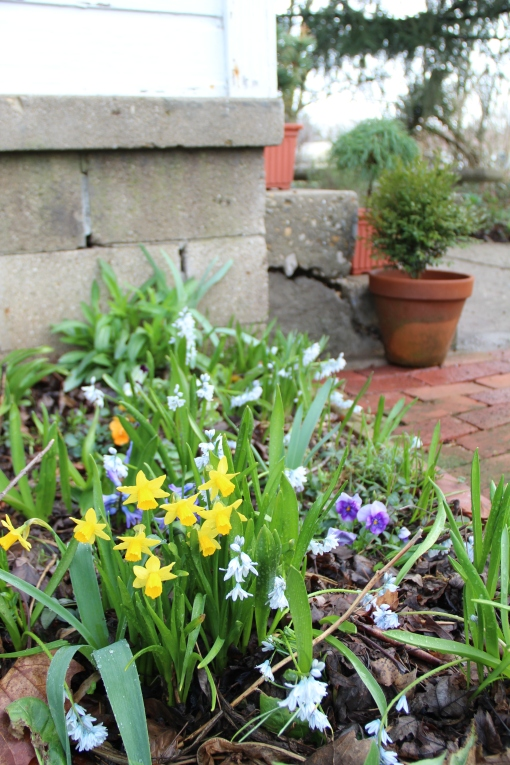 Mixed bulbs by back steps