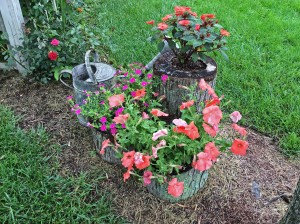 in garden container vignette 7-9-15