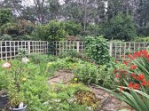 In garden inside veggie 7-9-15