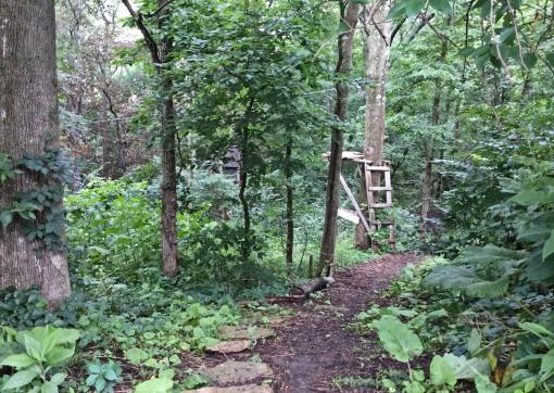 in garden Marks woods 7-9-15