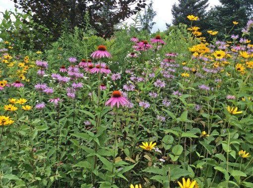 in garden prairie vignette 7-9-15