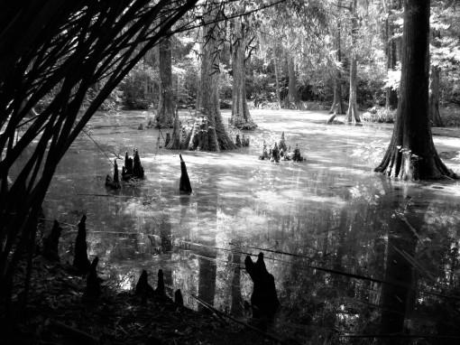 IMG_6689 swamp resize  (2)