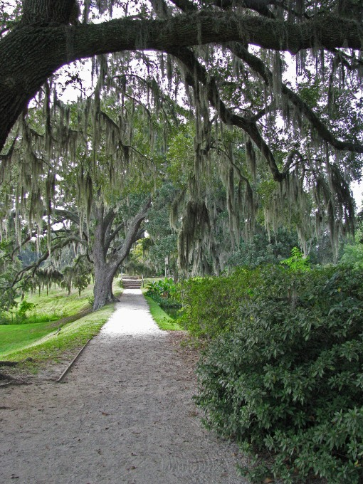 Spanish moss Middleton Place 9-14-11