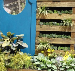 Succulents fill this green wall made from pallets.