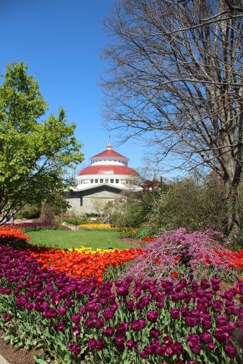 Tulip Show at Cincinnati Zoo & Botanical Garden