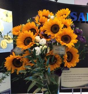 Helianthus Vincent's Choice Cultivate 7-11-16 crop