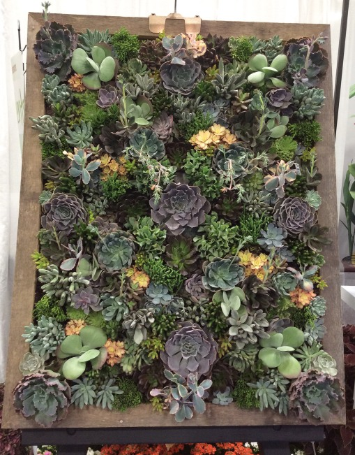 succulents framed Cultivate 7-11-16