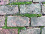 "Moss is a ""mortar"" that gives the brick walk a vintage look. (Caution is a must when walking on wet bricks and moss)."