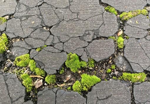 moss-in-asphalt-1-19-17-resize